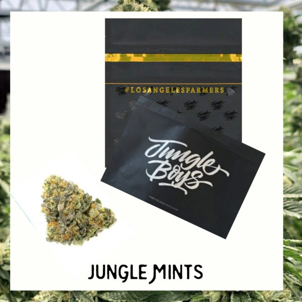 Jungle Mints strain